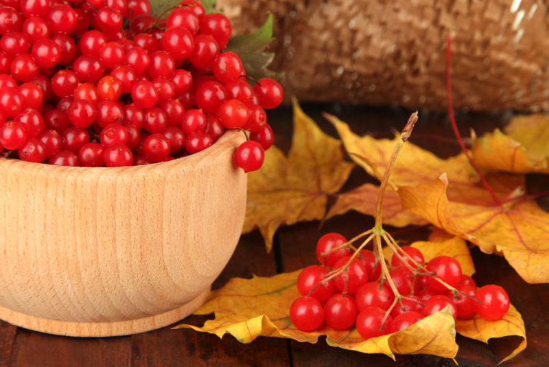 Варенье из калины: вкусная зимняя заготовка
