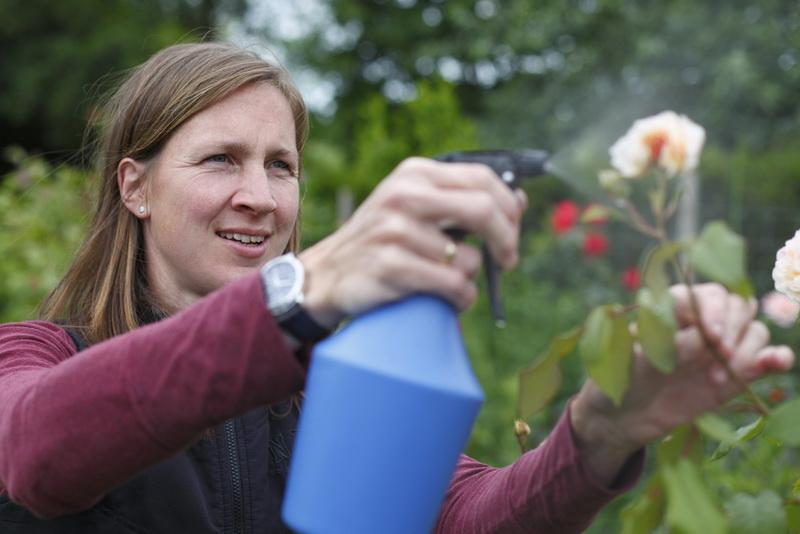 Тля на розах: как бороться народными средствами и специальными препаратами