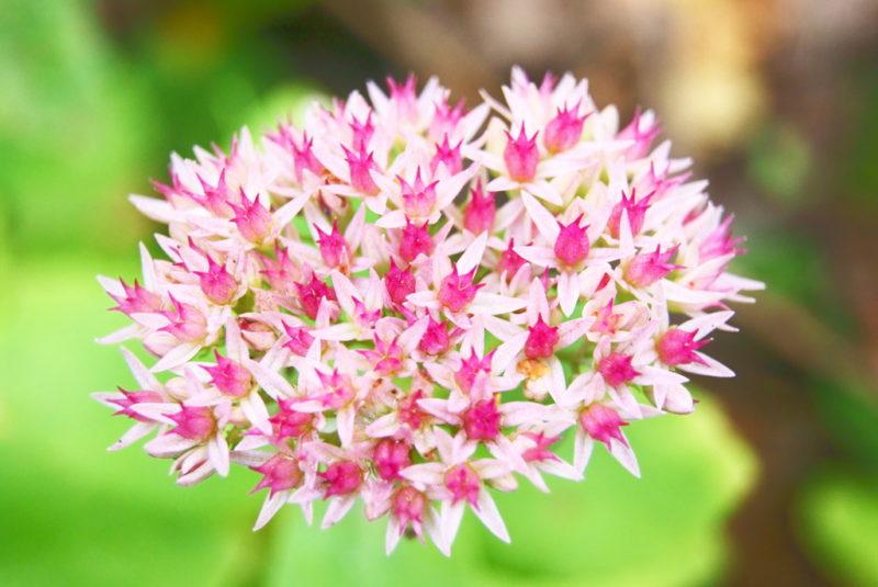 Виды цветов, которые способны вытеснить сорняки