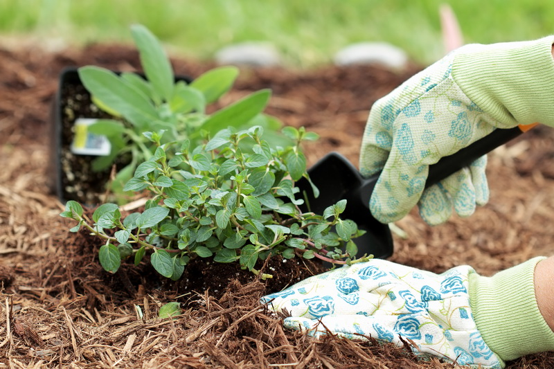 Мульча из скошенной травы с семенами: можно ли ее использовать на грядках?