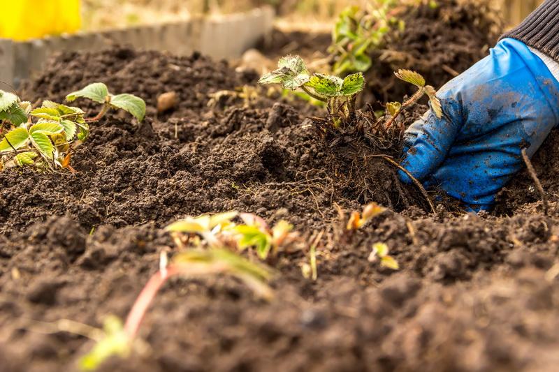 Обустройство теплой грядки осенью: поэтапная инструкция