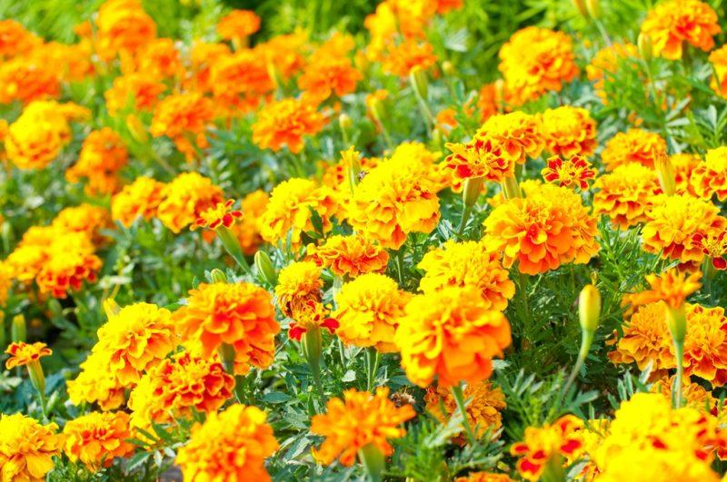 Поздние цветы — необычные сорта для шикарной клумбы