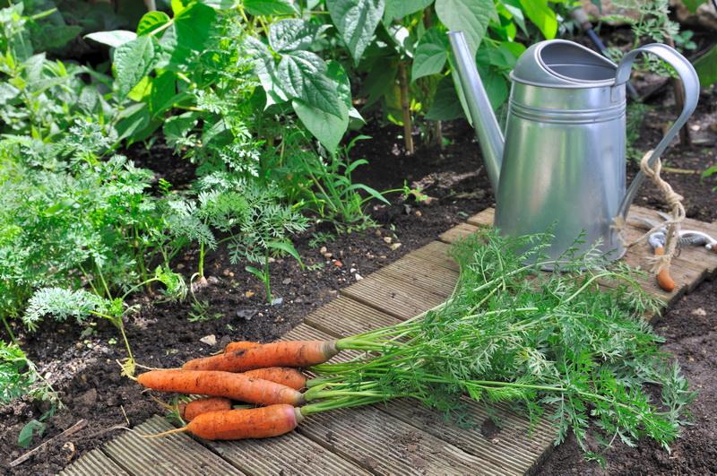 Помидоры, маринованные с морковной ботвой