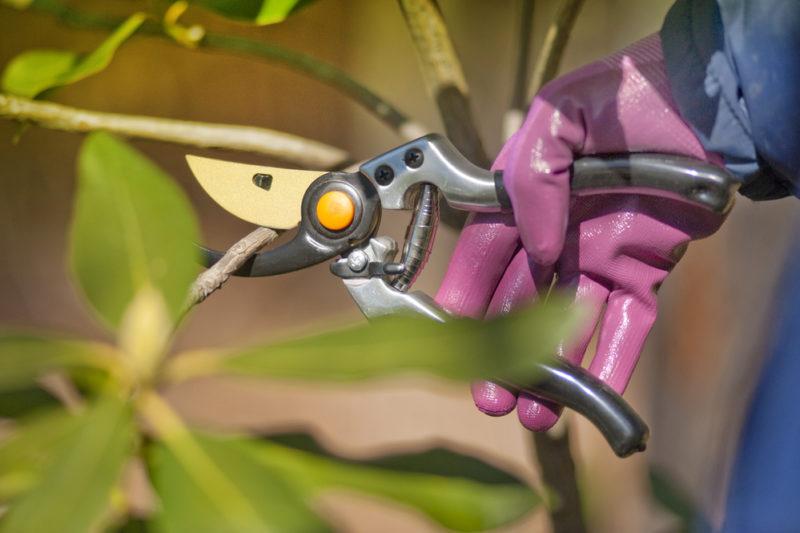 Инструменты, необходимые для садовых работ, — приспособления, которые помогут сэкономить время и силы