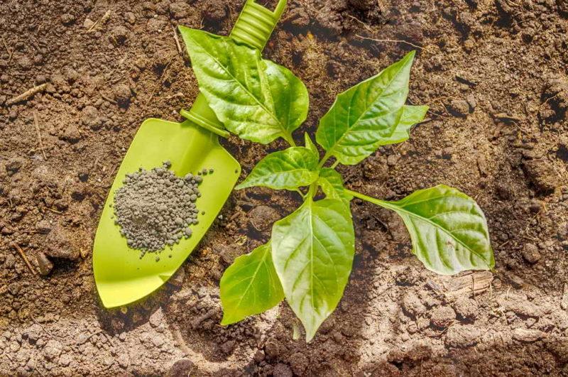 Планируем посадку культур на следующий год. Что будем сажать после капусты