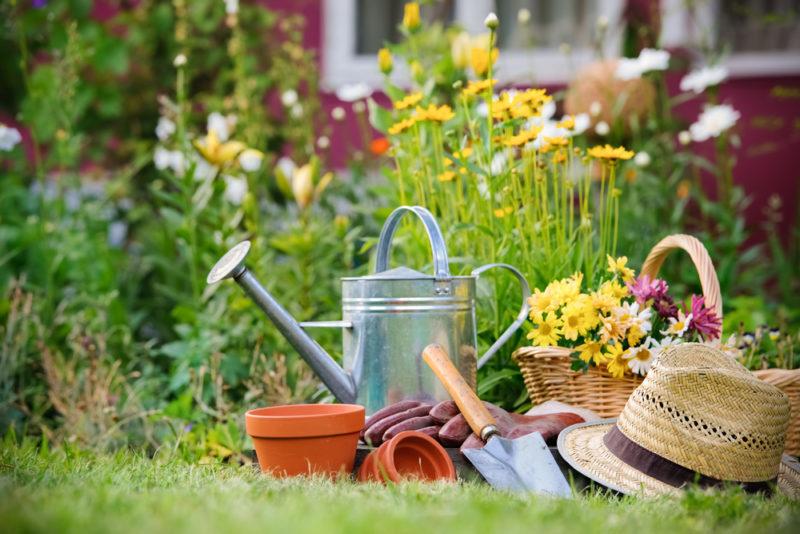 Работы в цветнике в августе — посадка и пересадка цветов
