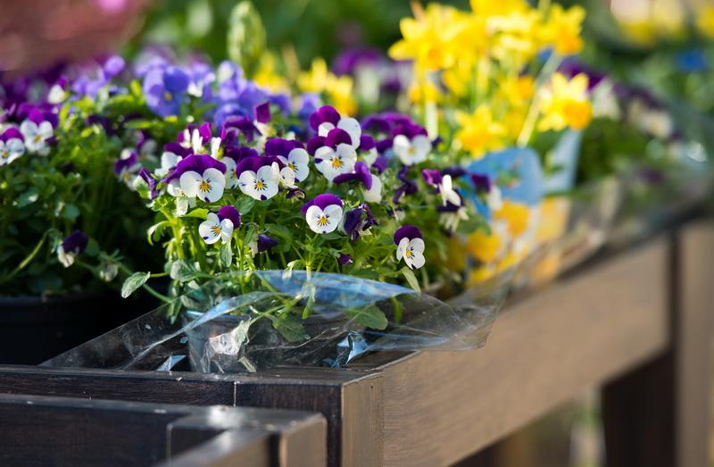 Самые популярные и стильные цветы для украшения квартиры
