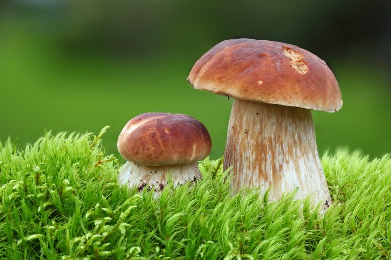 Явление симбиоза грибов и различных организмов