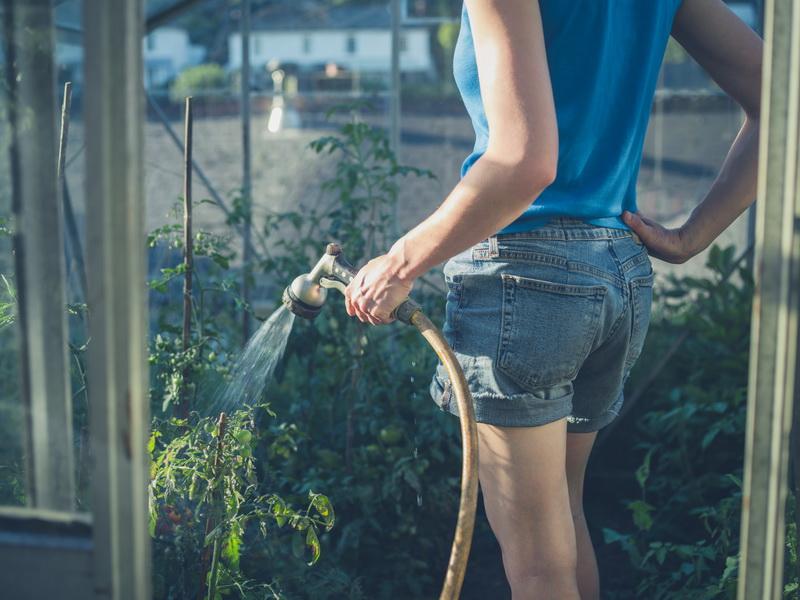Почему у растений скручиваются листья: наиболее частые причины