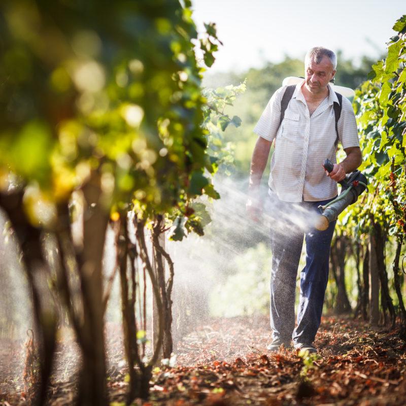 Виноград: комплексная защита от различных болезней и вредителей