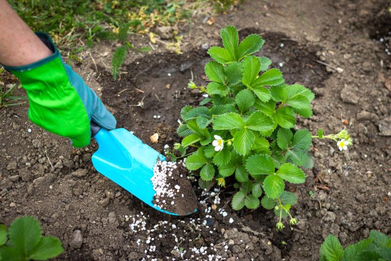 Августовские подкормки для огородных и садовых культур