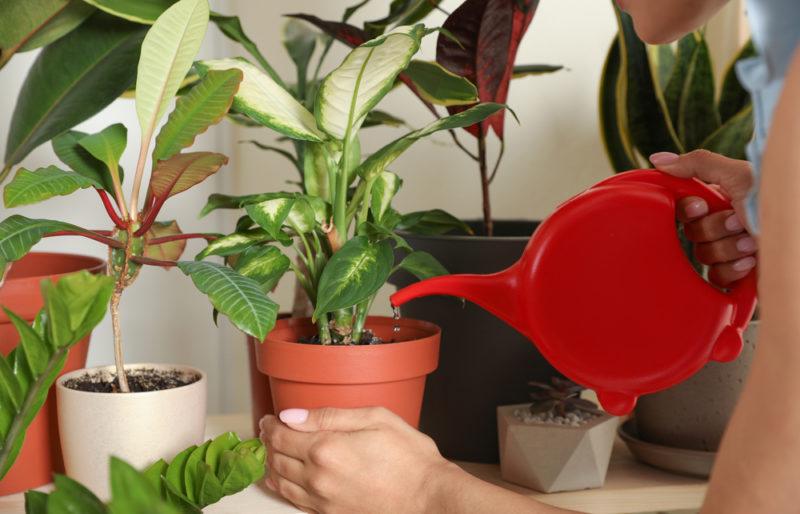 Полив комнатных растений: основные правила и нюансы