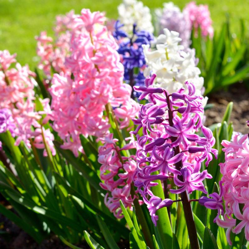 Лучшие многолетние цветы для декоративного оформления сада