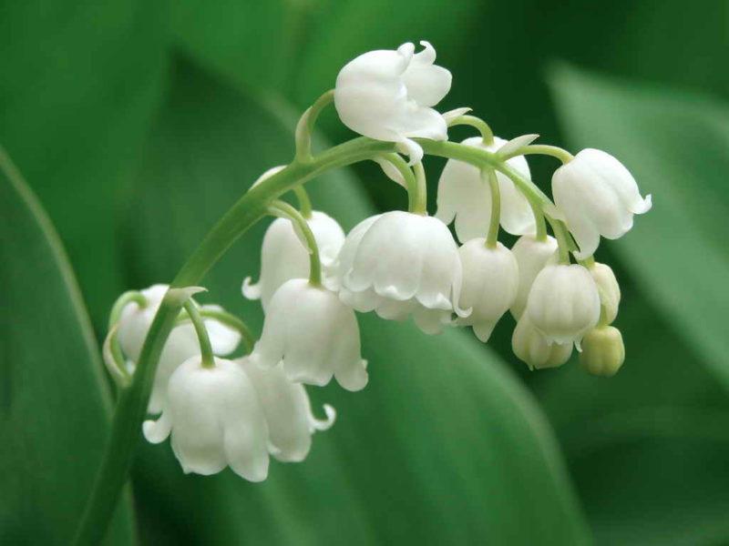 Красивые цветы-агрессоры на грядке