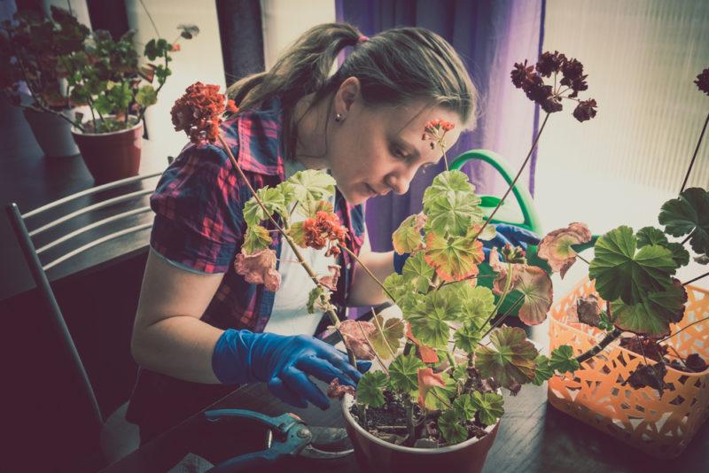 Ухоженные растения — эффектное украшение любого дома