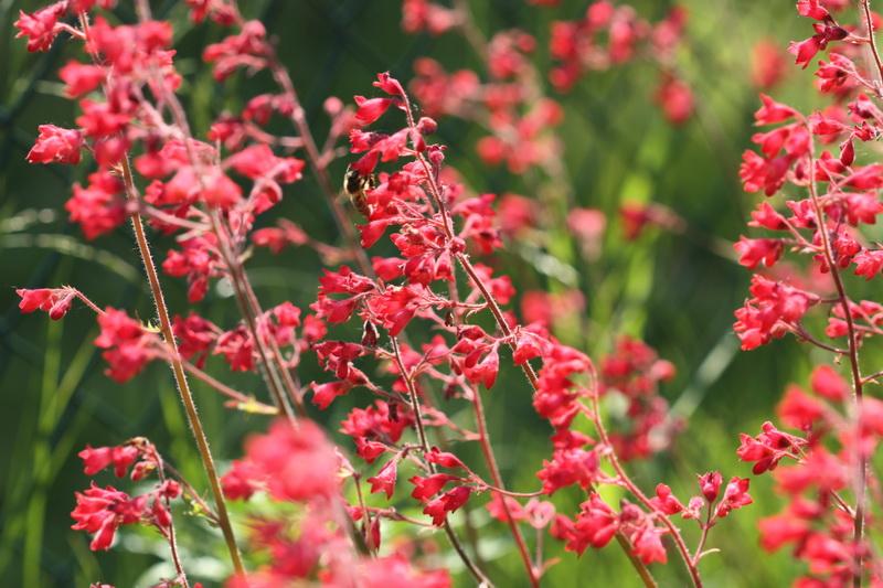 Пять лучших неприхотливых цветов для создания клумбы