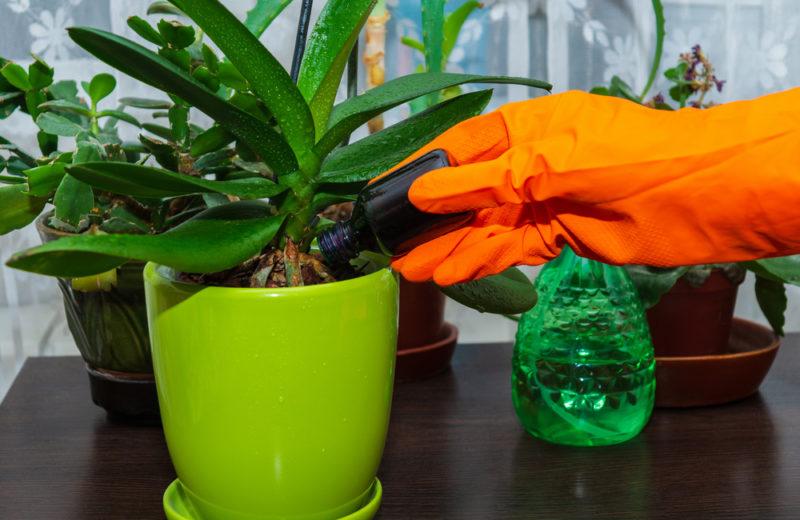 Орхидея отцвела. Что делать с цветоносом, чтобы быстрее появились новые цветы