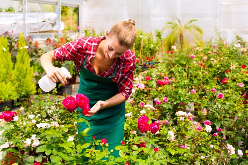 Розарий в садовом дизайне