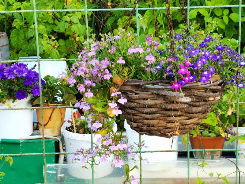 Уход за контейнерными растениями в августе и сентябре