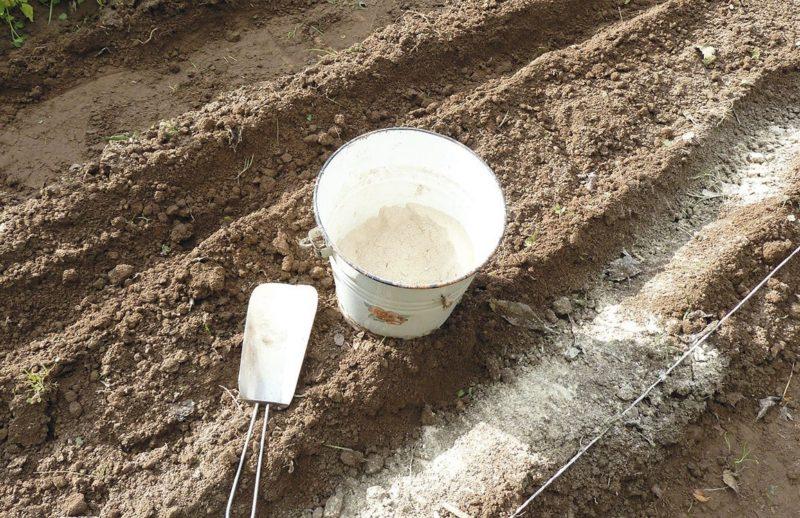 Использование доломитовой муки как удобрения