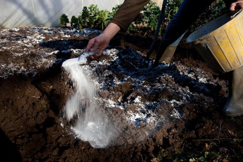 Как заранее «обезвредить» вредоносные бактерии, микроорганизмы и насекомых-вредителей — способы дезинфекции почвы