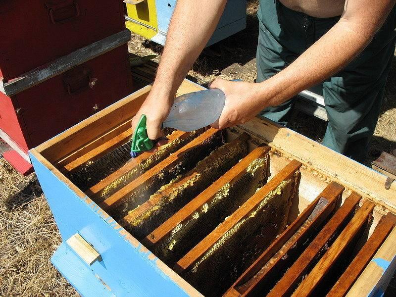 Осенняя профилактика пчелиных клещей — краткое руководство