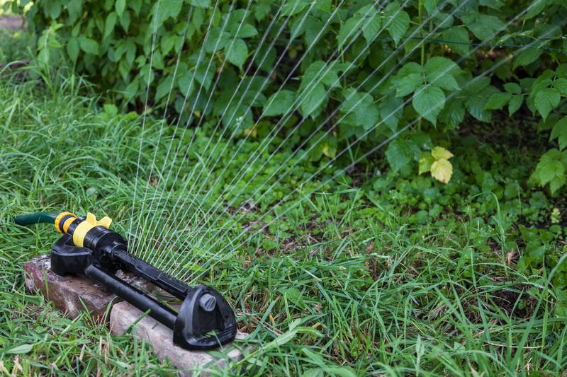 Нормы и особенности влагозарядного полива кустарников и деревьев — мой удачный опыт