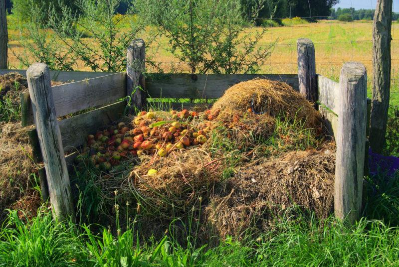 4 биосредства для ускорения созревания компоста: самые эффективные препараты, которые я применяю на своем участке