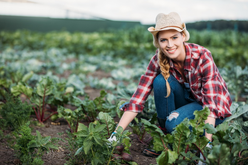 Свекольная ботва: нужно ли ее удалять в период роста корнеплода и как это делать правильно