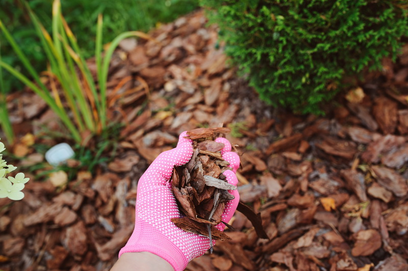 Польза древесных опилок для огорода