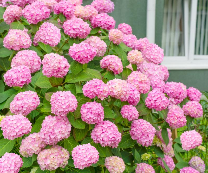 Несколько советов по посадке цветов в начале осени: какие и где разместить