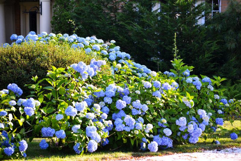 Осенние подкормки декоративных растений для обильного цветения весной