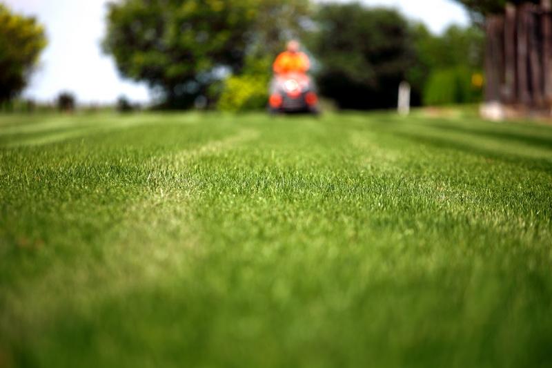 Сажаем газон на дачном участке: зеленые лужайки круглый год