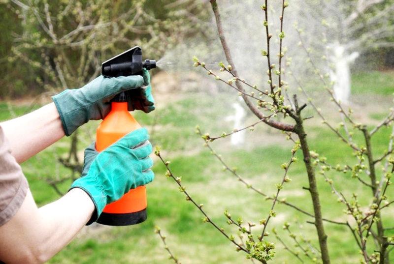 Чем и как обрабатывать яблони от вредителей