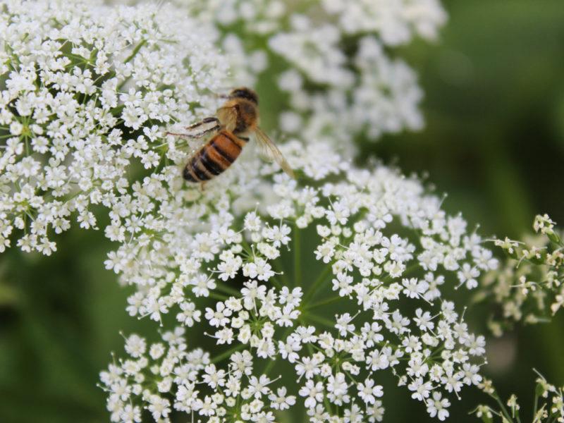 Подкормка пчел перед зимой