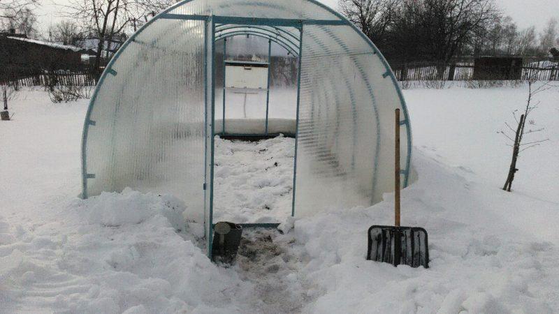 Соседи всегда спрашивают, зачем я зимой закидываю снег в теплицу. А это очень полезное дело — рассказываю почему