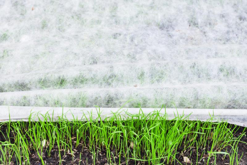 Тонкости выбора правильного укрывного материала для огорода