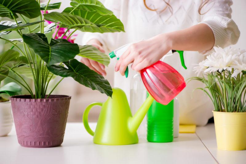 Ваши комнатные цветы осенью нуждаются в специальном уходе! 6 простых пунктов, которые я обязательно выполняю