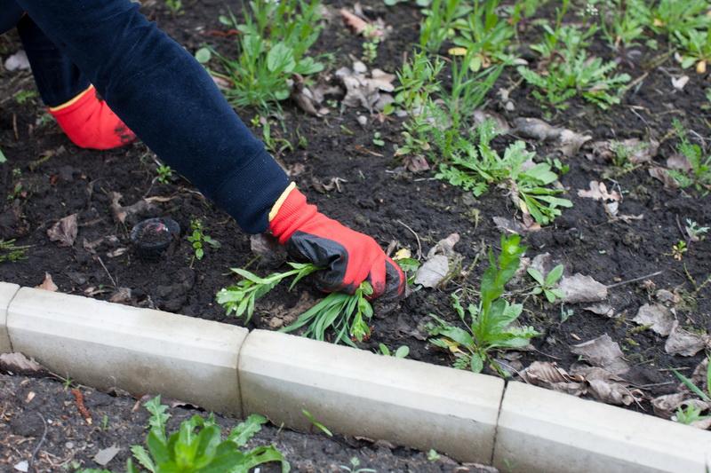 Почему так важно своевременно бороться с сорной травой — мои эффективные методы уничтожения и профилактики появления