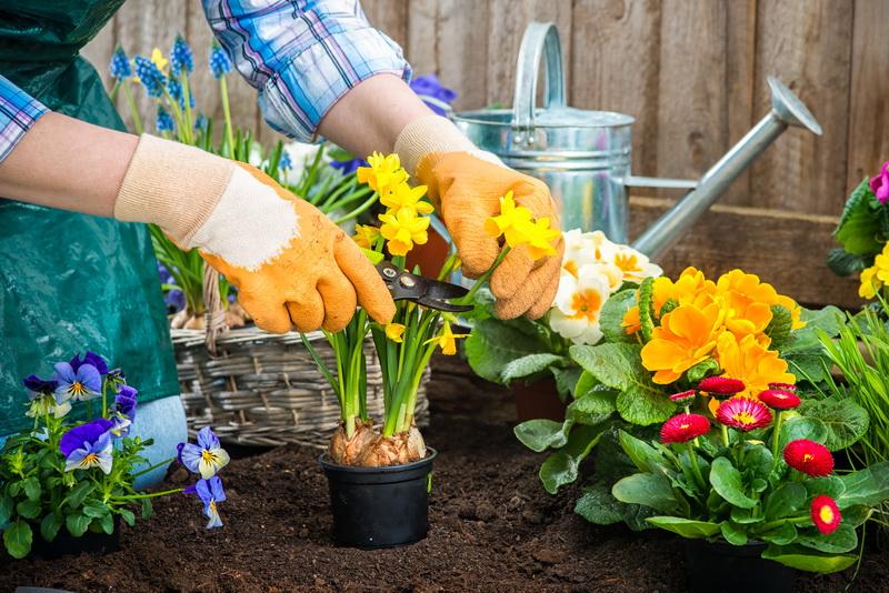 7 замечательных луковичных цветов, которые зацветут максимально рано и красиво, если их посадить осенью