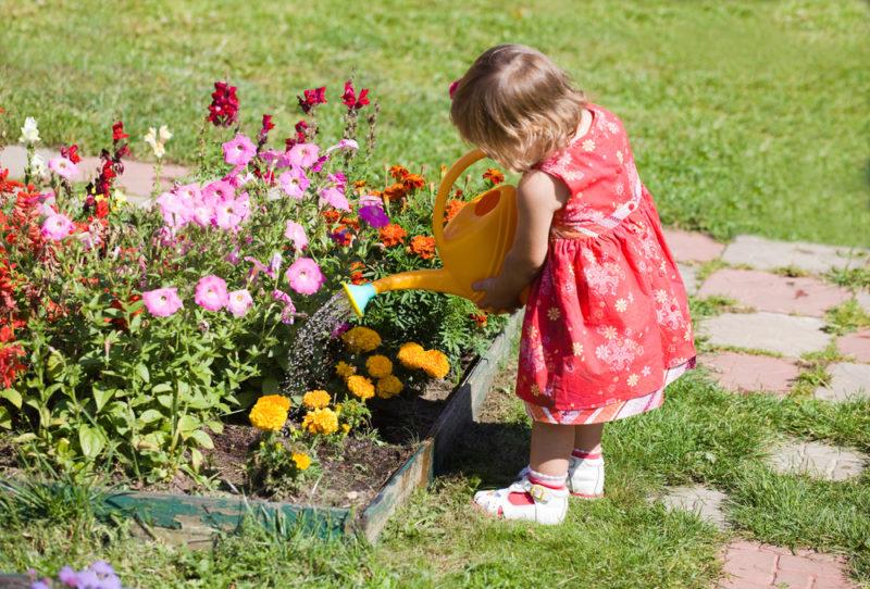 Моя клумба непрерывного цветения: делюсь советами и правилами подбора цветов