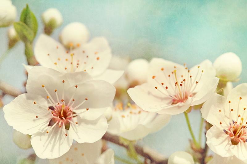 Цветение деревьев осенью — явление красивое, но опасное. Почему так происходит и чего следует бояться?