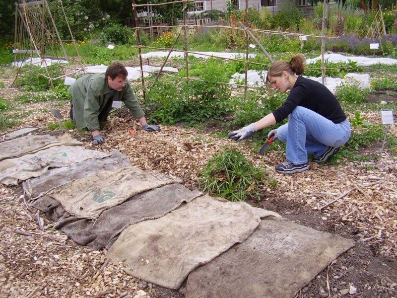 Как я спасаю проросшие осенью луковичные с минимальными потерями