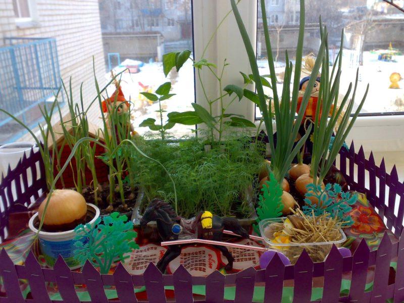 4 культуры, которые я не вырываю с грядки осенью, а переношу в дом, — мой огород на подоконнике прекрасно плодоносит в холода