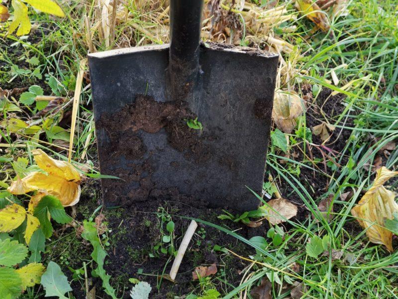 Копать или не копать грядки осенью. Рассказываю про плюсы, минусы и как именно перекапывать почву перед зимовкой