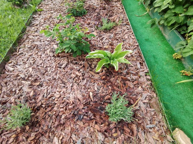 6 ошибок в мульчировании, которые я раньше совершал и только вредил своим растениям
