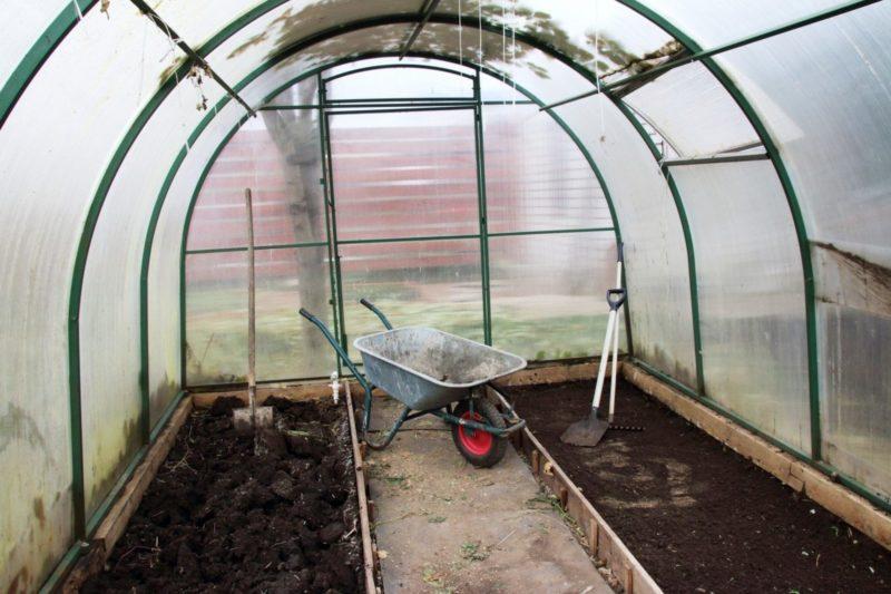 Специальная осенняя обработка теплицы защищает мои растения от фитофторы в следующем сезоне — делюсь секретами